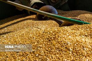 واردات گندم با ارز مرجع توسط یکی از سران پر نفوذ سیاسی
