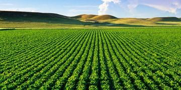 اصلاحات ارضی دهه ۴۰ آغازگر چالش امروز در حوزه کشاورزی و آب است