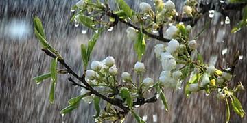 بارش برف و باران در کشور تا ظهر فردا/وزش باد شدید در پایتخت