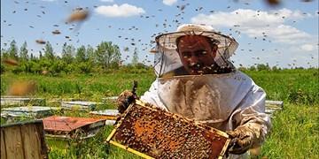 رونمایی از دستاوردهای صنعت زنبورداری