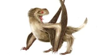 خزندگان بال دار نخستین پرندههای بدون پر بودند