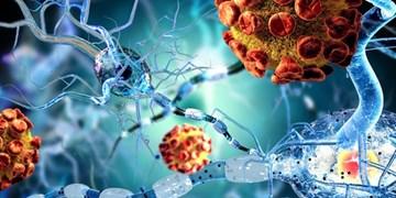 سلولهای ایمنی روده، التهاب مغزی مرتبط با  «اماس» را کاهش میدهد