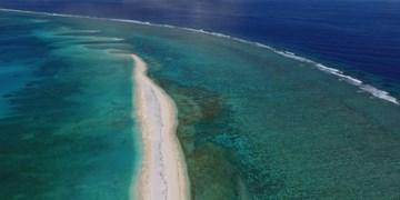 گرمایش جهانی ماهیها را «گرسنه» میکند