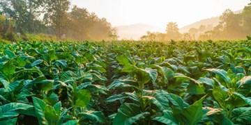 محققان: گیاهان هم « مضطرب » می شوند