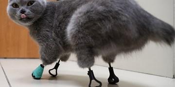 چاپ سه بعدی  گربه ناتوان را احیا کرد+فیلم و تصاویر