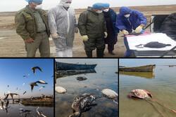 زمستان مرگبار در میانکاله/ تلفات پرندگان ادامه دارد