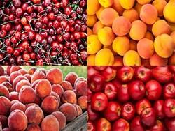 قیمت برخی میوههای تابستانه ۸۵ درصد کاهش یافت/افت ۱۰ هزار تومانی نرخ موز